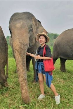 Van Ly and the elephants in Thailand
