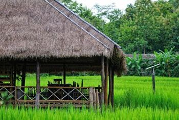 Kamu Lodge rice fields