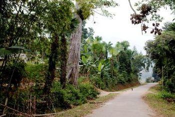 Homestay Mai Chau route
