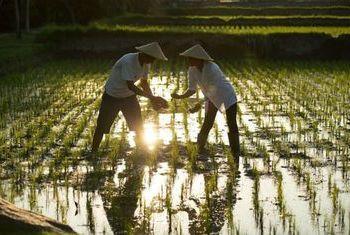 Alaya Ubud Rice Fields