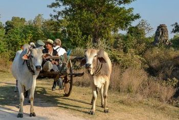 Banteay Chhmar Tented Camp  activities