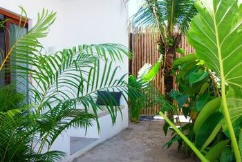 Tamu Hotel garden