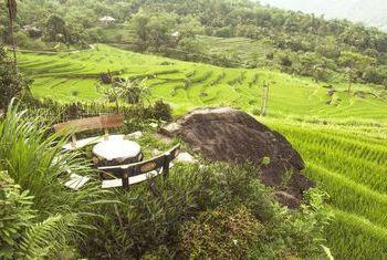 Pu Luong Retreat Landscape