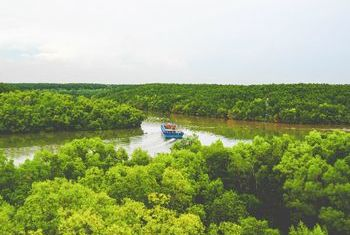 Can Gio Forest - A Green Oasis in Ho Chi Minh City