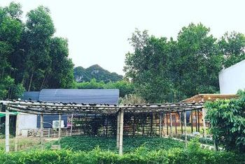Chay Lap Farmstay