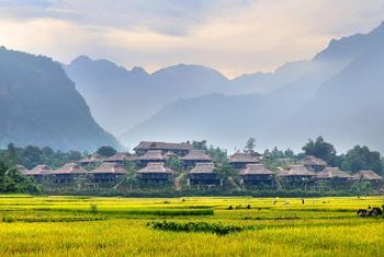 Mai Chau Ecolodge Rice Fields