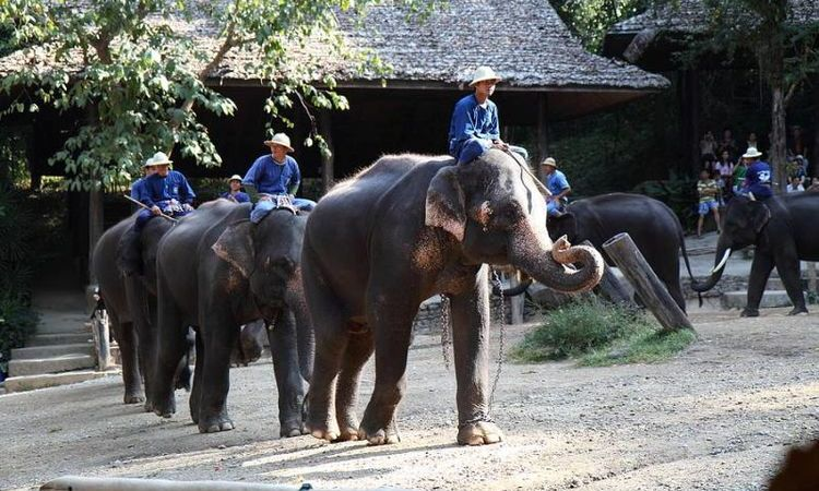 Top 7 Things To Do In Chiang Mai