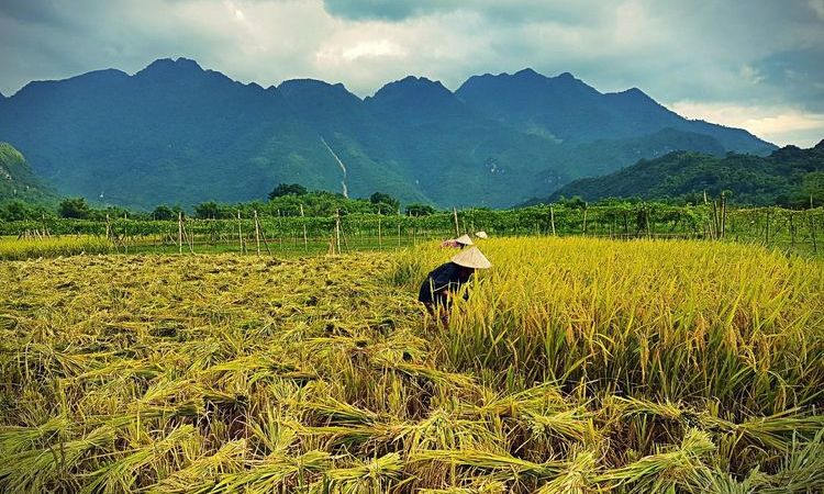 Top Culture and Heritage Destination for a lifetime trip in Vietnam