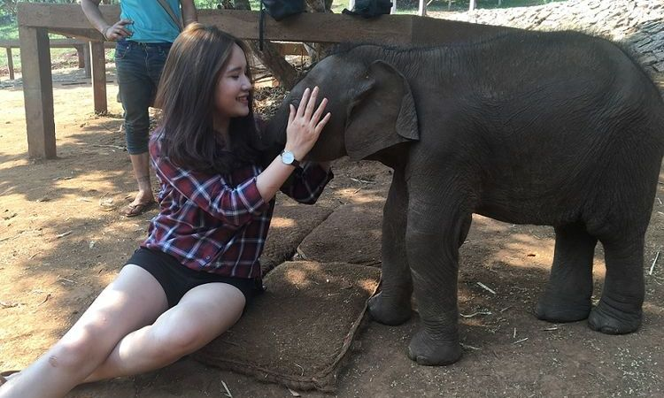 7 Ethical Interactions That The Elephants Want You To Do For Them
