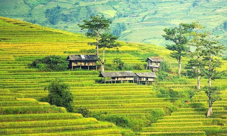 8 Most Breathtaking Rice Terraces In Asia