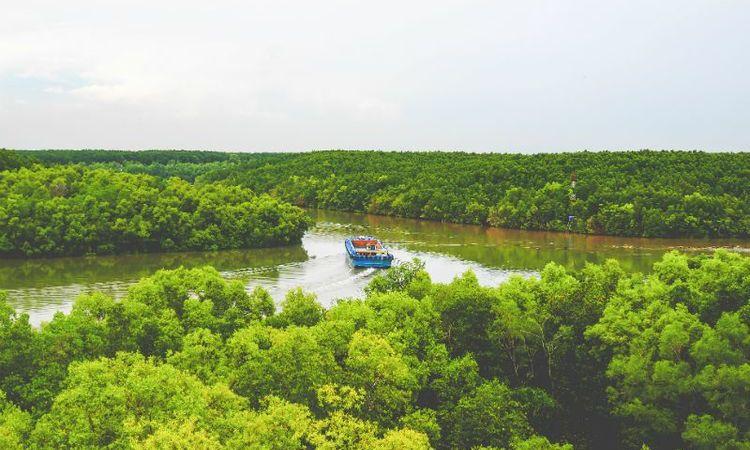 La Forêt De Can Gio - Une Oasis De Verdure à Ho Chi Minh Ville