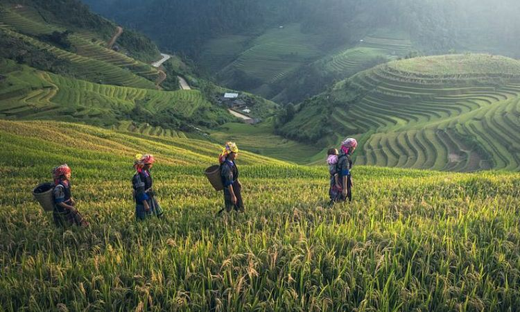 Essential Information To Make Your Sapa Vacation Much More Exciting