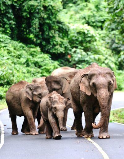 Interaktion mit den Elephanten