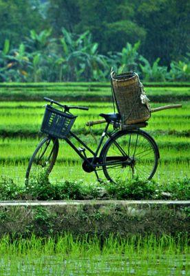 Nord-ouest du Vietnam et la charmante Hoi An