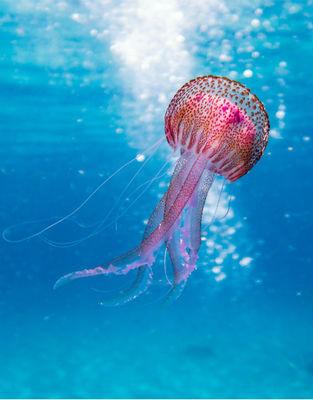 Underwater Wonderland