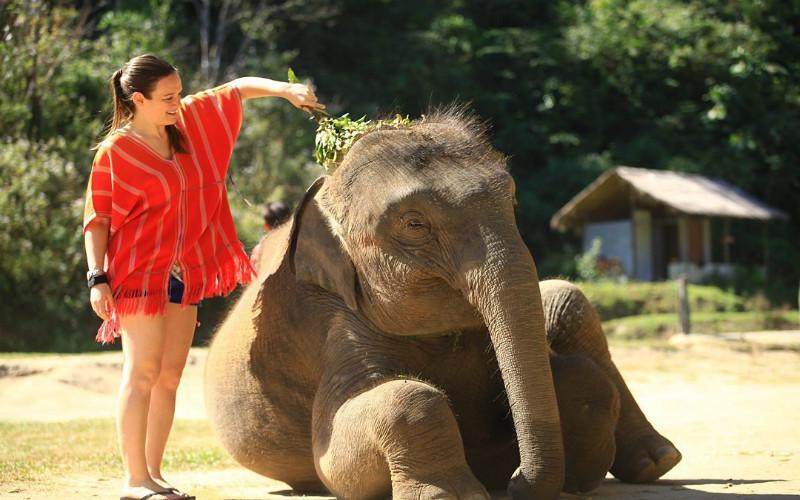 Get close to the Elephants
