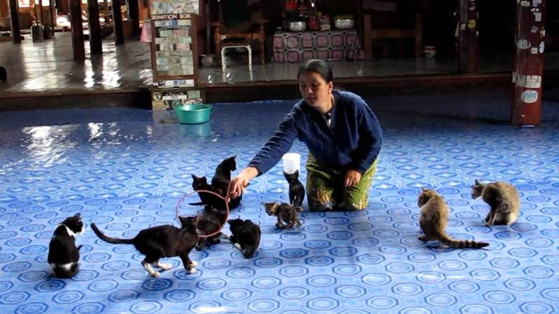 The Jumping Cat Monastery - Inle Lake