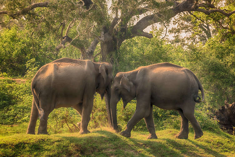 top-5-reasons-for-visiting-sri-lanka-wild-life1