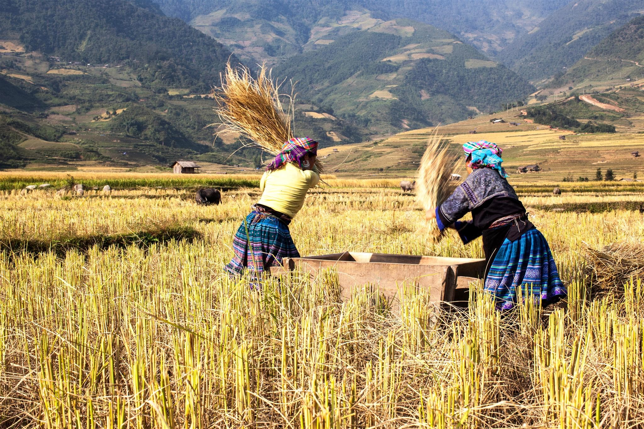 After 8 hour driving from Hanoi by bus, you get the chance to admire the impressive Mu Cang Chai rice terraces and explore the local ethnic cultures of Tay and H'mong people.