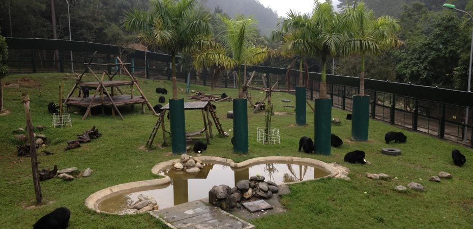 One in five double bear houses in Vietnam Bear Rescue Centre