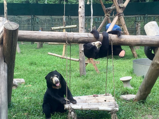 But now, Murphy (hanging on the pile) is a happy and playful bear. He spends most of his time to play with Goldie, his best friend