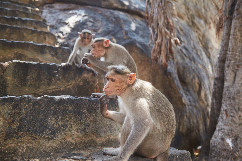 three_monkeys_on_the_stairs_thailand