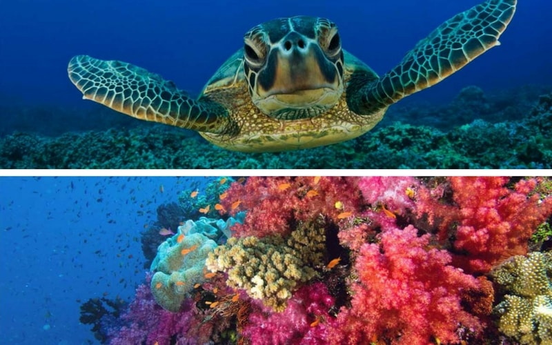 Tailor-made scuba diving and snorkeling