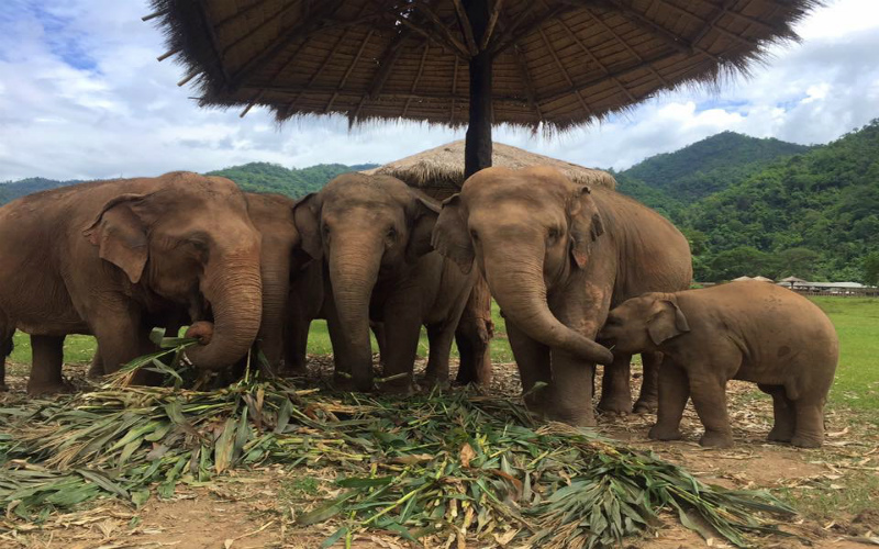 Amazing Ethical Elephant Interactions in Thailand
