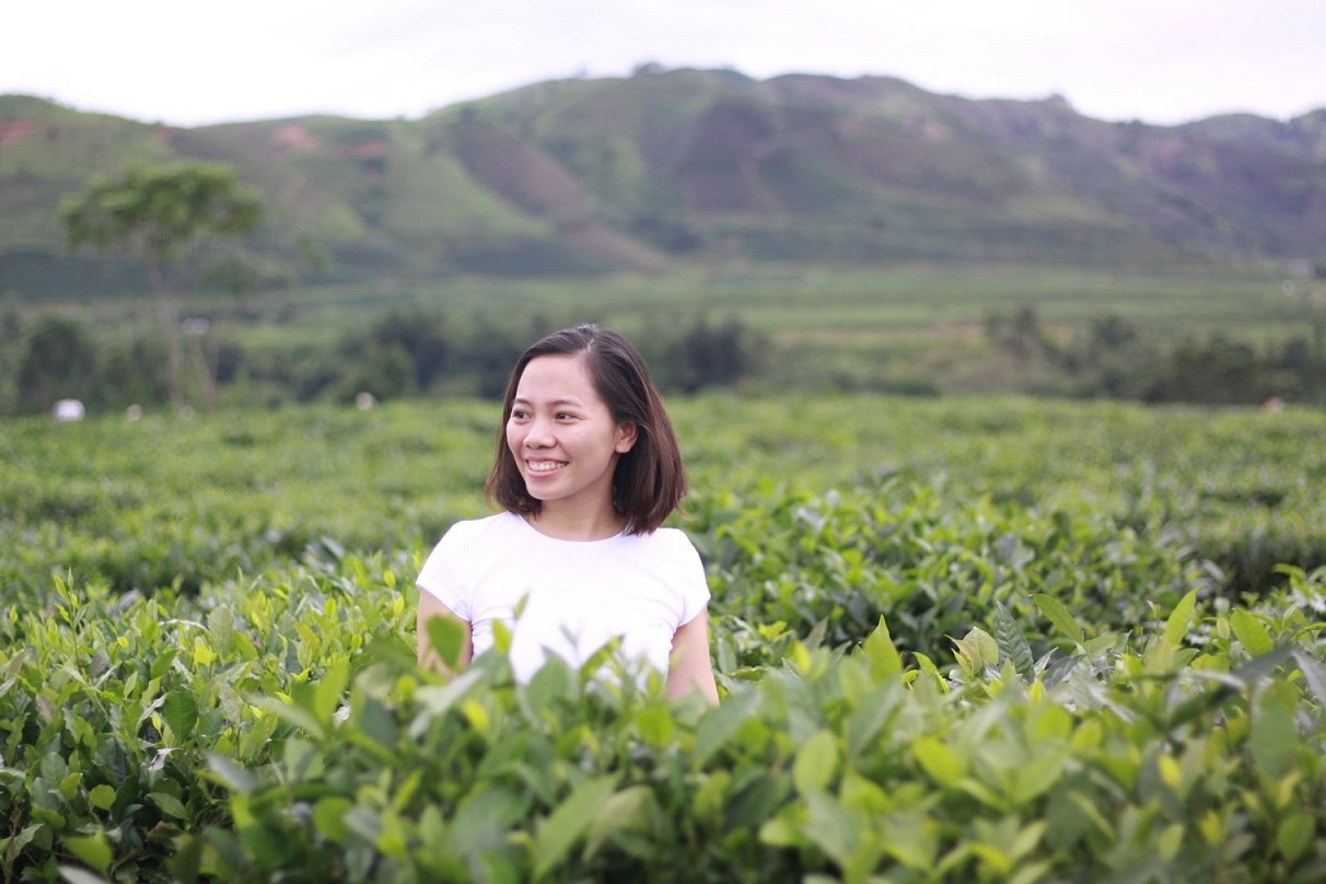 A tea plantation in Thanh Son