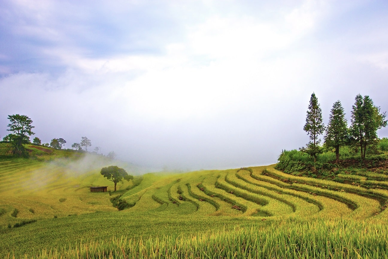 I've dreamed of these beautiful terraced rice fields many times, but I've never made it come true.