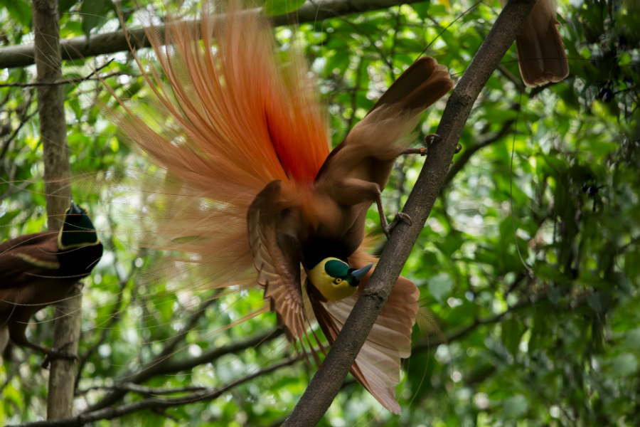 A colorful bird of paradise in the park