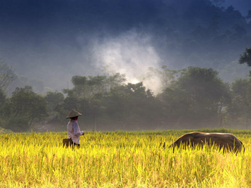 With all the country has to offer, it's no wonder that Vietnam is one of the best destinations in Asia