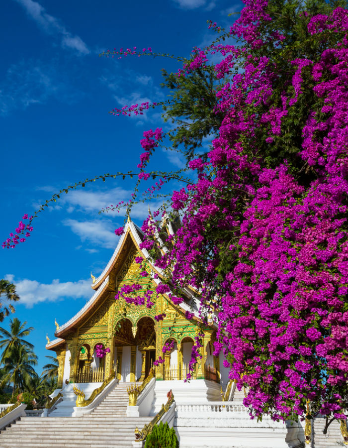Royal Palace Museum is one of the main attractions in Luang Prabang