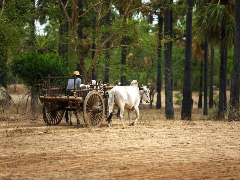 Take a horse-cart tour in Bagan