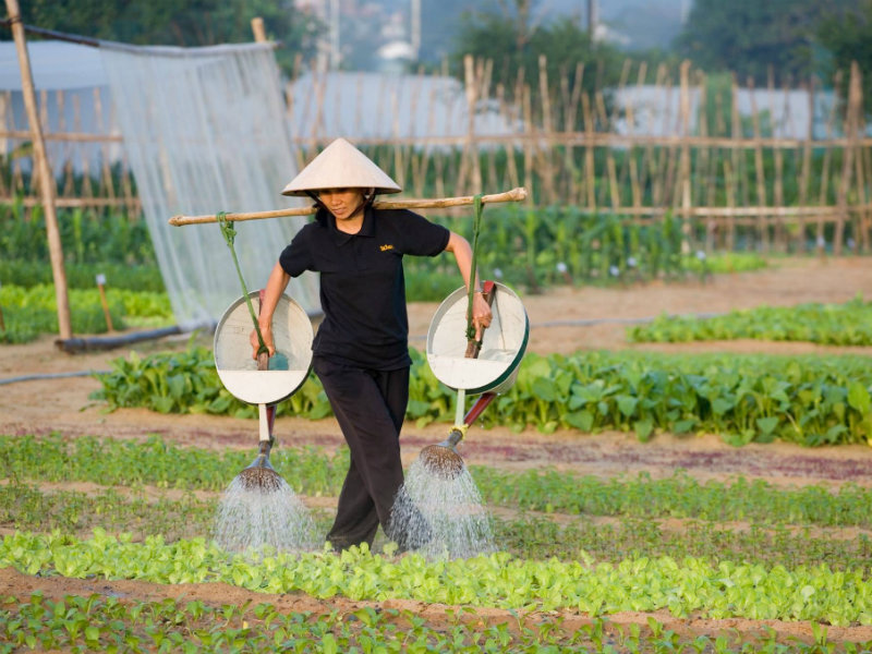 Farmers in Tra Que are still doing their irrigating, fertilizing, and harvesting by hand