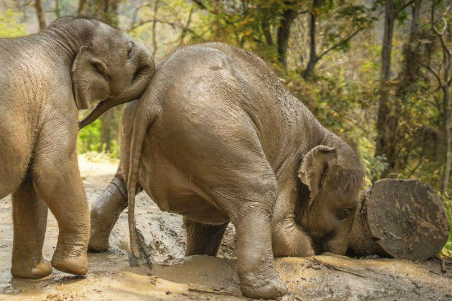 Lovely elephants that you want to share your love with