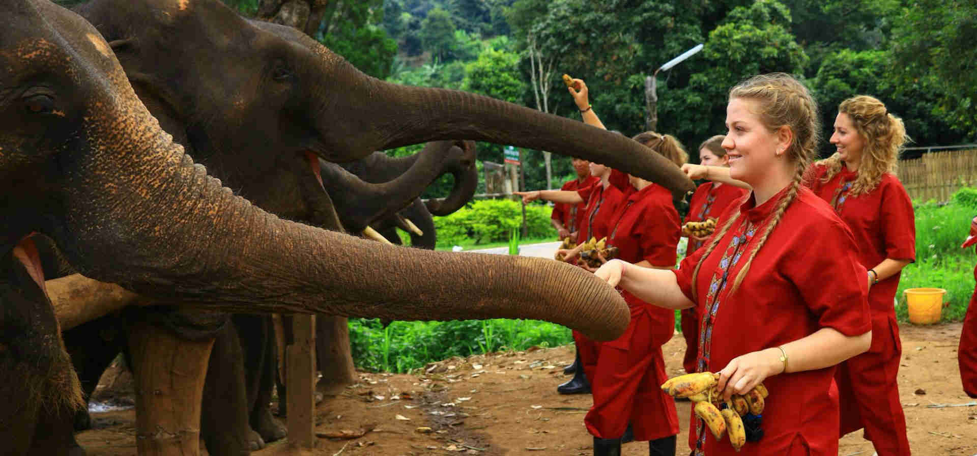 Ethical Elephant Interactions