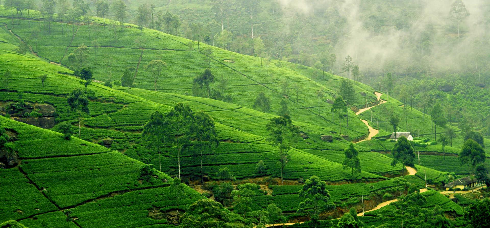 The Best of Sri Lanka